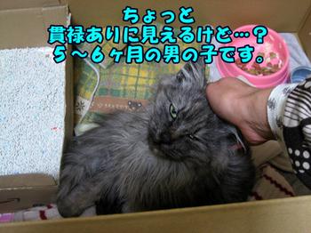 Gureifukuchan4