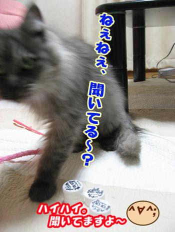 Fukuomocha5