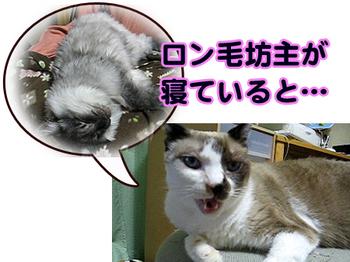 Uraboyaki1