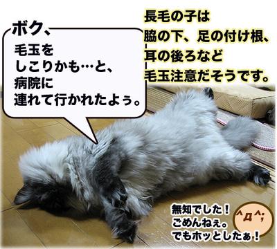 09911fukukedama1