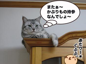 Takainikora3