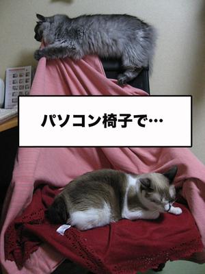 Koji1