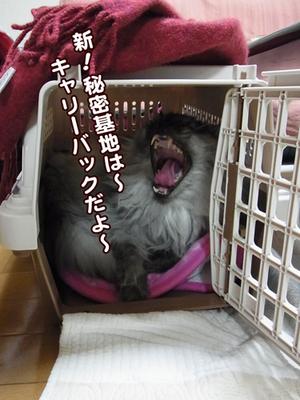 Fukuhimitukiti114104