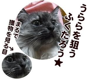 11621neraumefuku